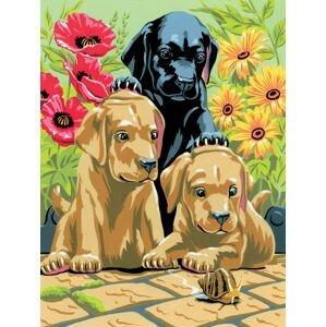 Kreativní set na malování A4 - štěňata labradora