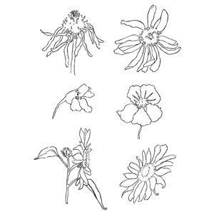 Transparentní razítka - luční květiny (silikonové razítka)