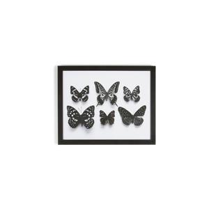 Obraz v rámu Graham & Brown Botanical Butterfly,50x40cm