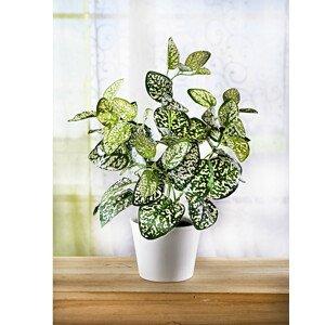 Magnet 3Pagen Zelená rostlina v květináči