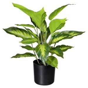 Umělá Rostlina Mramornatka, 45cm